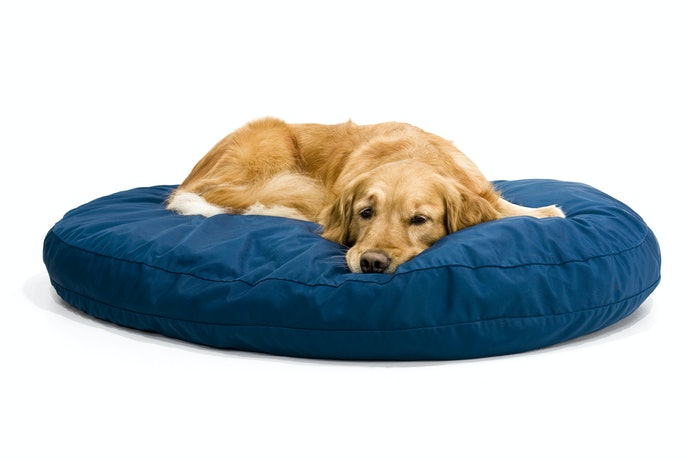 Top 10 Best Baby Beds For Puppy To Buy In 2020