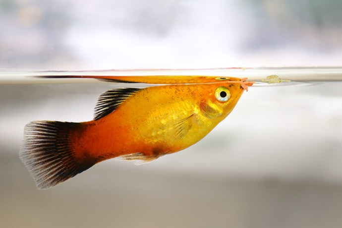 Top 10 Best Diets For Tropical Fish