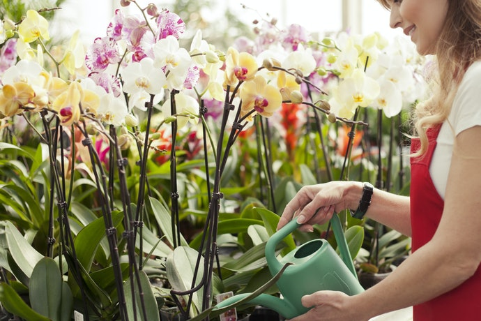 Top 10 Best Fertilizers For Flowers To Buy In 2020 (Forth, Vitaplan And More)