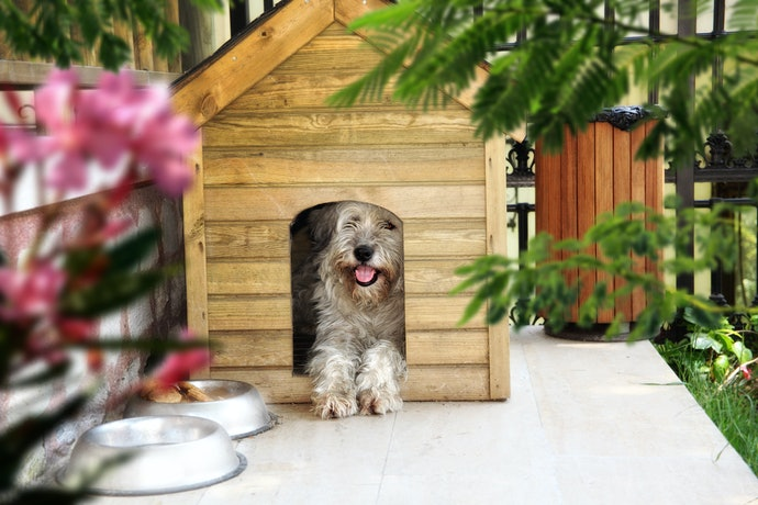 Top 10 Best Houses For Dogs