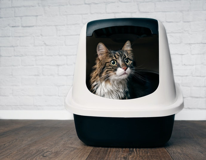 Top 10 Best Sand Boxes For Cats To Buy In 2020