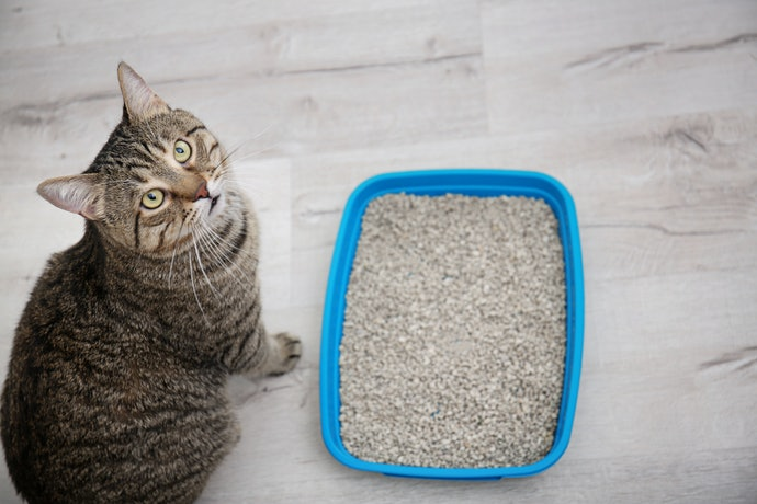 Top 10 Best Sand Boxes For Cats