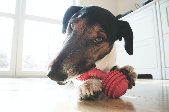 Top 10 Best Toys For Dogs Great In 2020