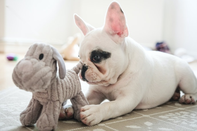 Top 10 Best Toys For Small Dogs In 2020