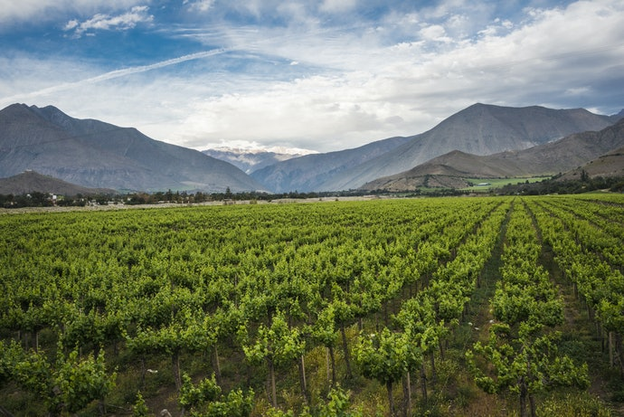 Top 10 Best Wines Cabernet Sauvignon 2020 (Chileans, Argentines And More)